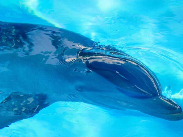 Anantara Kihavah Maldives Villas Dolphin Discovery