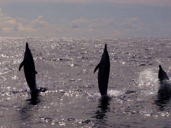Anantara Vilamoura Algarve Resort Dolphin Watching Boat Trip