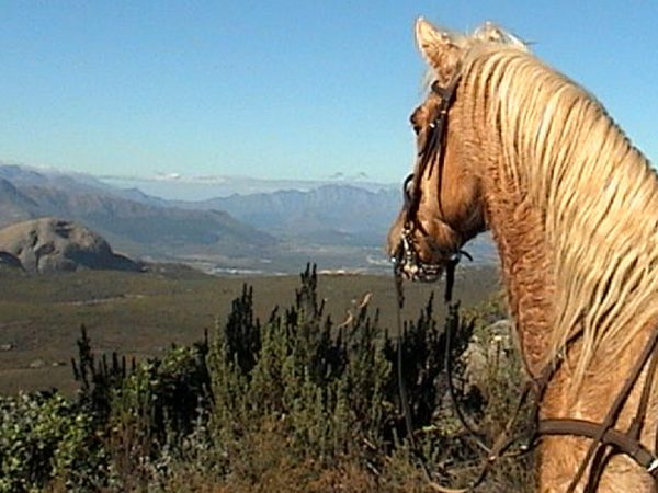 Grande Provence Heritage Wine Estate Horses for Courses