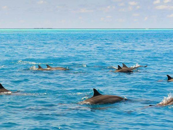 Naladhu Private Island Maldives Dolphin Quest