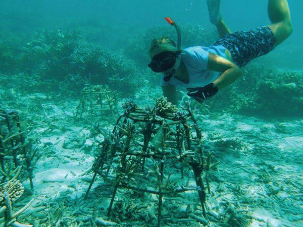 Niyama Private Islands Maldives Adopt a Coral