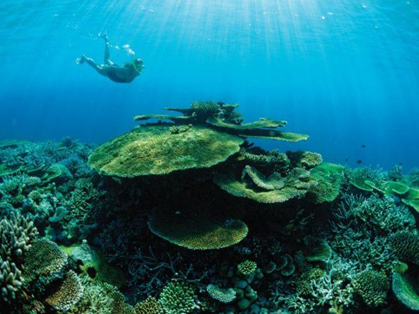 Niyama Private Islands Maldives Snorkelling & Diving