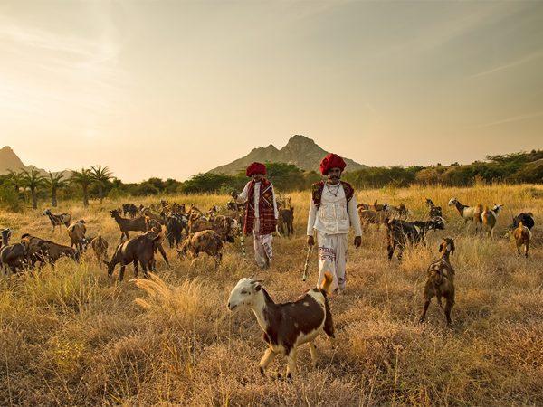 Shepherd's Stroll, Adventure Hikes and Treks