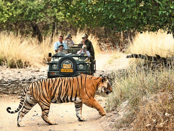 Sujan Sher Bagh Game Drives