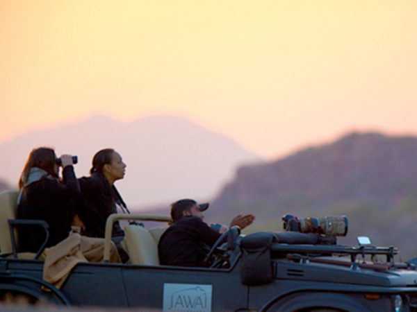 Sujan Jawai Leopard Camp Ranger Diaries
