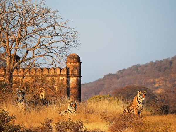 Sujan Sher Bagh The Ranthambhore Fort Ramble