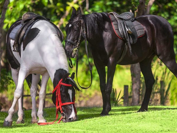 Ulagalla Resort by Uga Escapes Ulagalla on Horseback