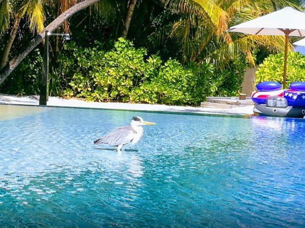 Huvafen Fushi Maldives Pool