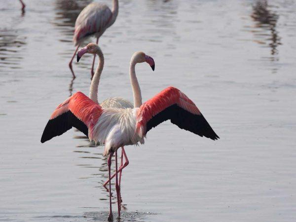 The Abu Dhabi Editions Al Wathba Wetland Reserve