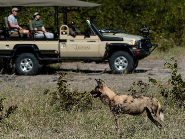 Tuludi Natural Selection Game Drive