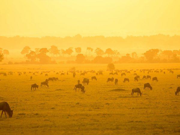 Roving Bushtops Camp Serengeti Wildlife