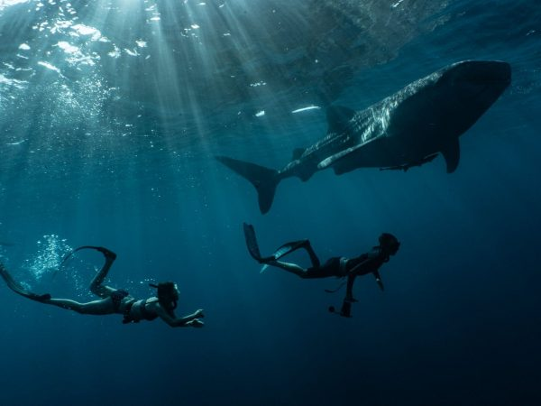 True North Adventure Cruises whale shark diving