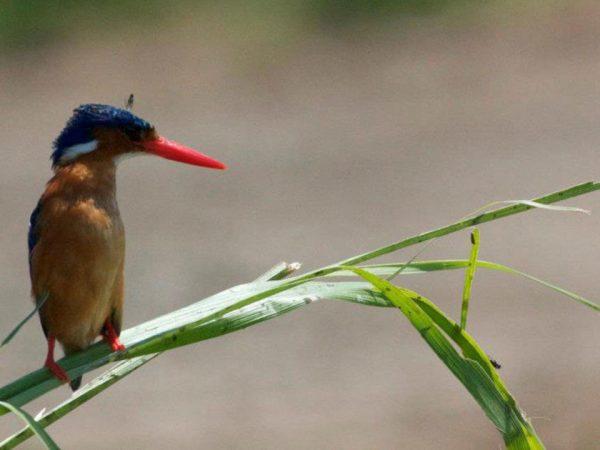 Virunga Lodge Birding