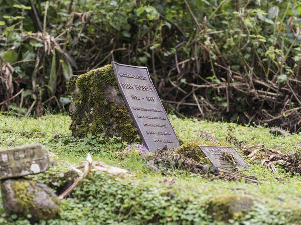 Virunga Lodge Visit Dian Fossey's Grave