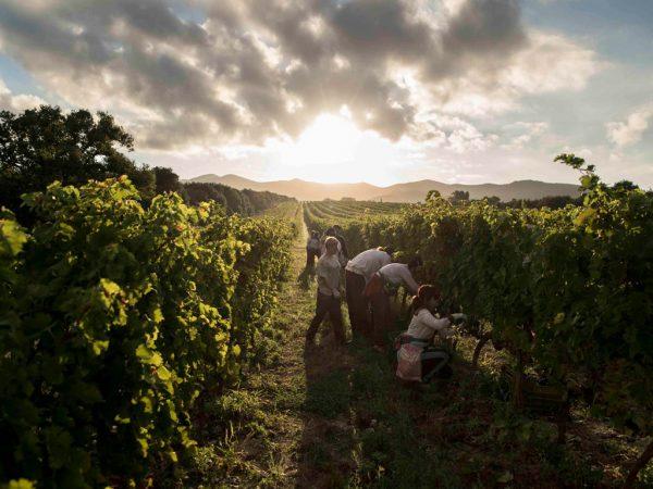 Altagamma Italian Experiences Wine Tour