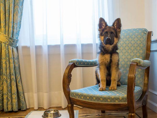Due Torri Hotel Pet Friendly