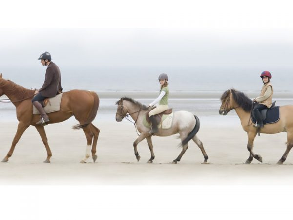 Hotel Barri?re Le Majestic Cannes Horse Riding