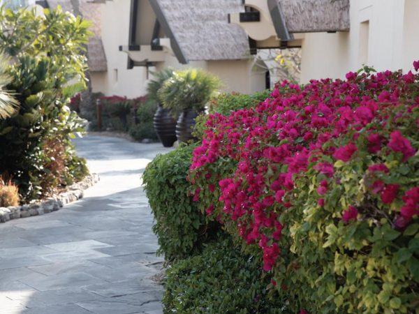 Jumeirah Beach Hotel Garden
