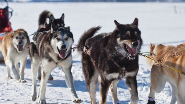 Six Senses Residences Courchevel Husky Sledding