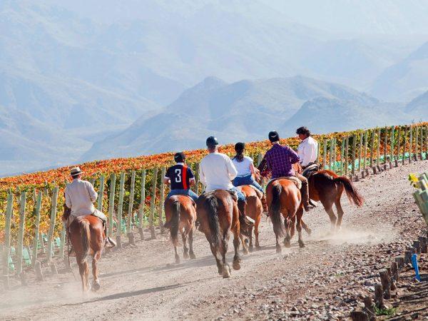 Casa de Uco Vineyards and Wine Resort Activities