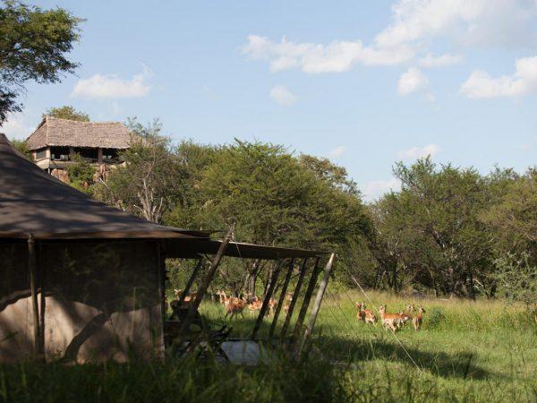 Elewana Serengeti Pioneer Camp (2)