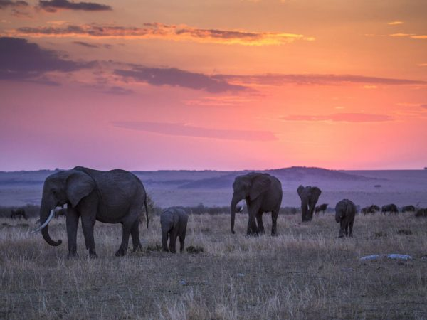 Great Plains Conservation Mara Expedition Sunset View