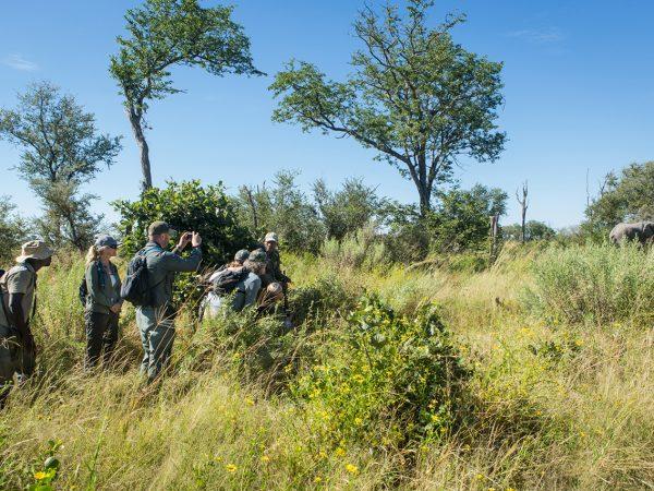 Great Plains Conservation Selinda Adventure Trail Bushmen Walk