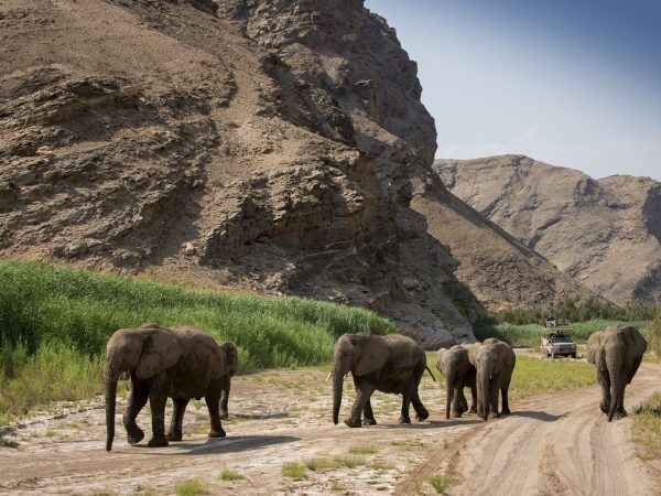 Hoanib Valley Camp Elephants in river bed