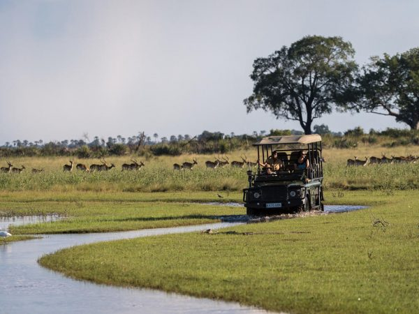 Jao Camp Full-Day Game Drives and Picnics