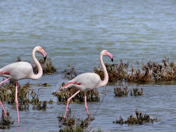 La Sultana Oualidia Bird Watching Safari