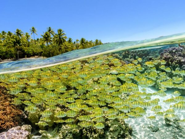 Le Tahaa Island Resort and Spa Snorkeling