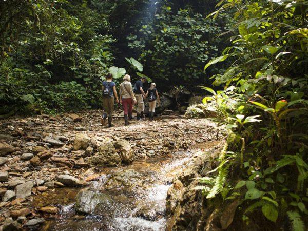 Mashpi Lodge Capuchin Monkey Trail