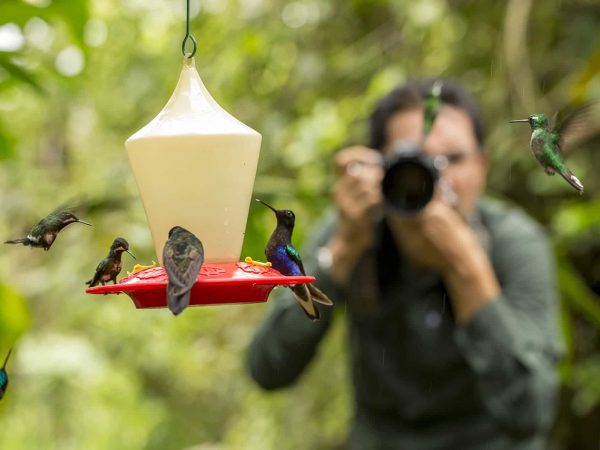 Mashpi Lodge Hummingbird Garden
