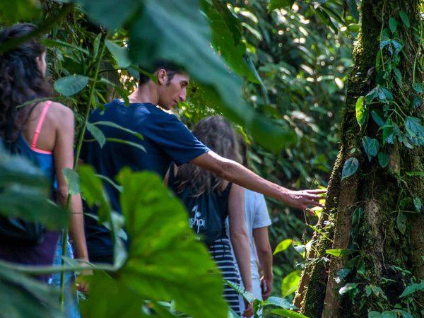 Mashpi Lodge Strangler Fig Trail