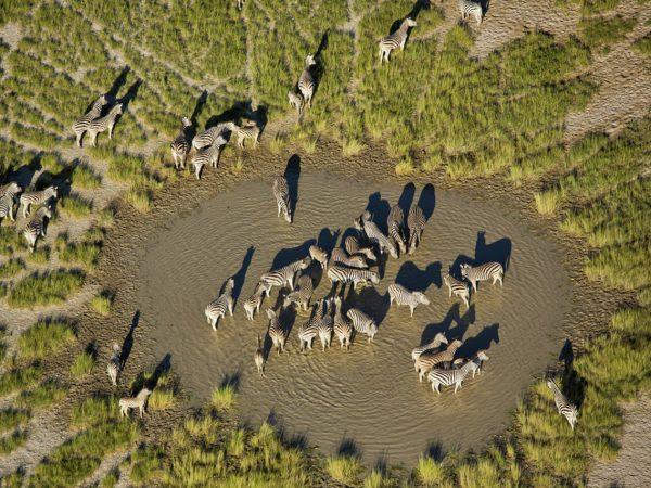 Natural Selection San Camp Zebra & Wildebeest Migration
