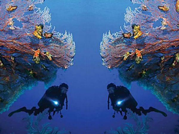 Wa Ale Island Resort Diving