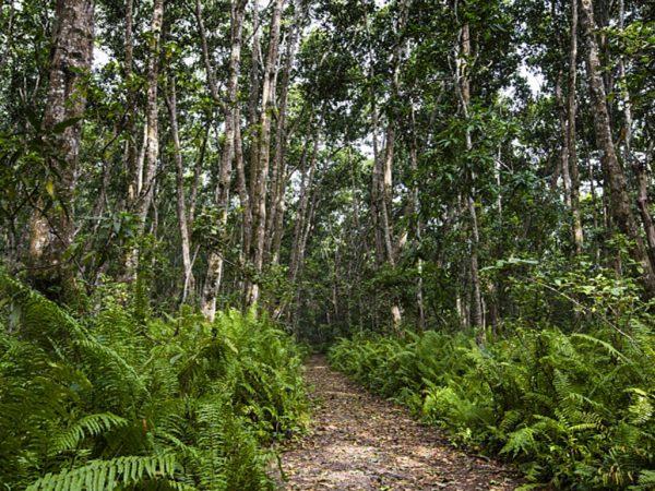 Zuri Zanzibar Jozani Forest