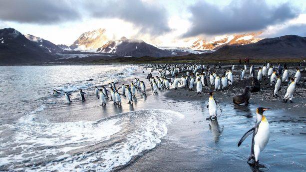 National Geographic Ponant Expedition Cruises Antarctica Penguins