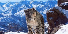 Snow Leopard Lodge, Ladakh