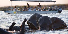Pangolin Photo Safaris & Chobe Hotel